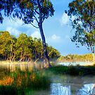 The River Murray - Renmark, South Australia by Mark Richards
