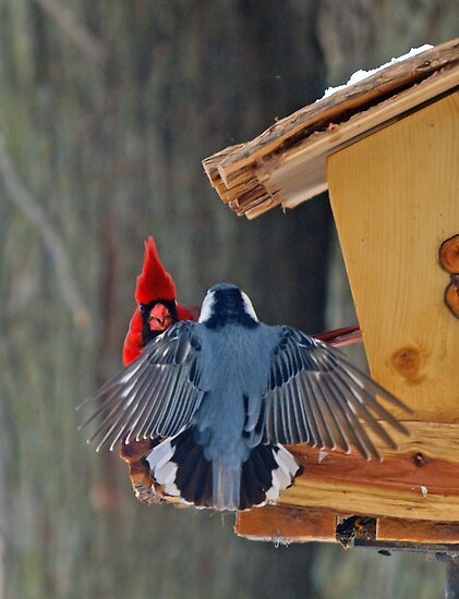 Stay on your own side of the feeder by Dawne Olson