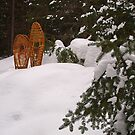 Winter Trail by Dawne Olson