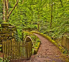 Small bridge at Jesmond Dene by David Patterson