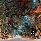 Olive Grove by Jennifer Kutzleb