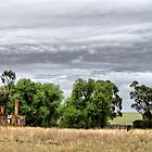 old burnt out house on the plains by outbacksnaps