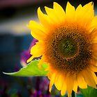 Sunflower Smile  by IamPhoto