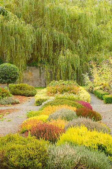 The Heather Knot Garden by Marilyn Cornwell