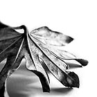 Leaf study. by Nick Egglington