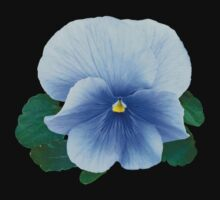 Baby Blue Pansy by Susan Savad