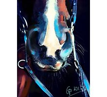 Horse-  Read my lips and cuddle my nose Photographic Print