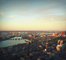Miniature Boston  by Tom Cadrin