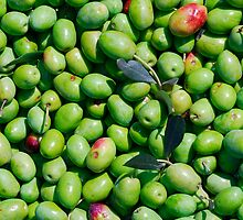 A Harvest of Green Olives by jojobob