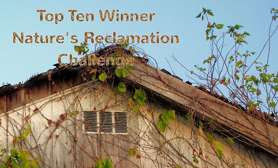 Banner - NR - Top Ten Winner by aprilann