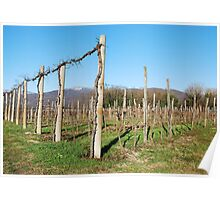 Winter Grape Vines Poster