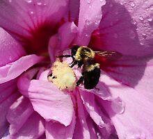 Make Honey not Money   by Pacovina