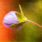 Tiny Bud by Melinda Anderson