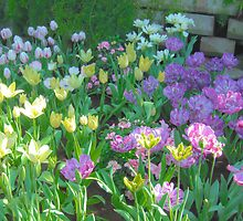 Soft Pastel Tulips in Sun by Flatoutwhimsy