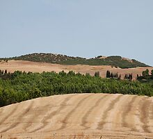 Brown Field and Trees by jojobob