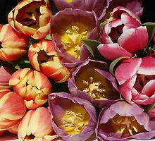 Fresh and colorful tulips by Susanna Hietanen
