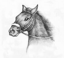 Pencil Drawing of a horse by kirilart