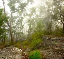 Morning mist #2, Hawkins Lookout ~ Wiseman's Ferry  by Rosalie Dale