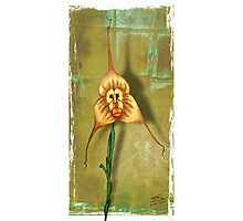 Monkey Face Orchid Photographic Print