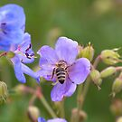 Mountain flower with bee by Marcidog