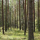 pine forests by mrivserg