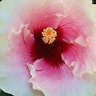 flower on murietta by Erik Lopez