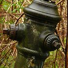 Hydrant in Weeds by Chad Burrall