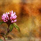 Clover Flower by EelhsaM