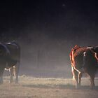 winter morning cows by cjrolston