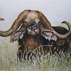 Buffalo by ricksilverfish