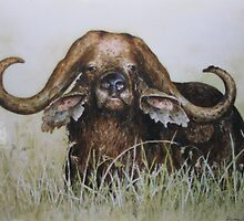 Buffalo by ricksilverfish