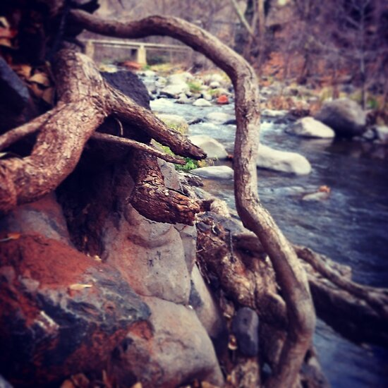 Roots by Anelle121314