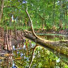 Loxahatchee River by Michaela Kopecka