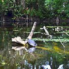 Loxahatchee River 5 by Michaela Kopecka