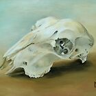 Sheep Skull by Lynne  Kirby