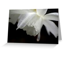 White Daffodil Floral Photo Print Greeting Card