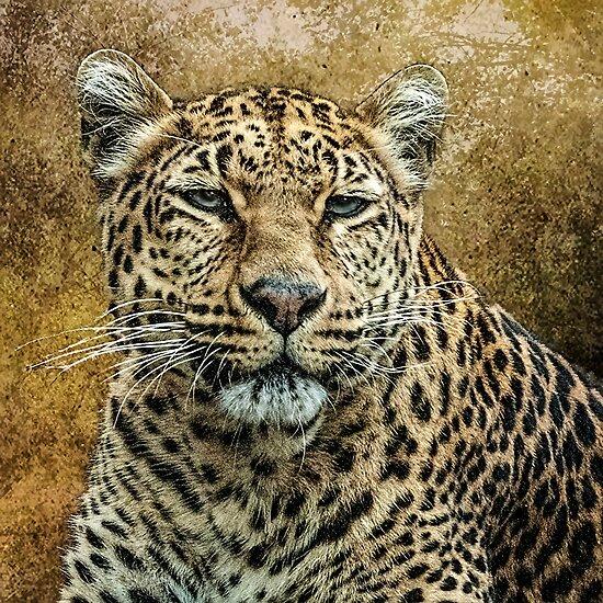 Leopard by Tarrby