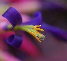 Bromeliad Flower by lib225