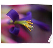 Bromeliad Flower Poster