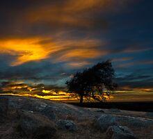 Wind Swepted - Dog Rocks Batesford by Graeme Buckland
