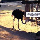 The Ostrich Joke by Thomas Orrow