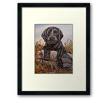 Lab Pup Framed Print