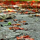 Road of Leaves by LivMore2
