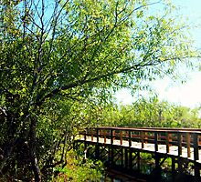 Bridge and Nature - Landscape Photography Florida by WayfarerPrints