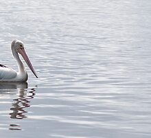 lonely pelican by Anne Scantlebury