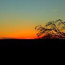 Time to Head Home   Rural NSW  Australia  by Kym Bradley