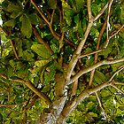 poster tree by lainer15