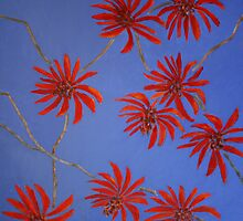 Coral Tree, Claremont by Clare McCarthy