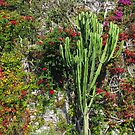 Mediterranean wall decoration - cactus and colorful leaves by kirilart