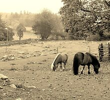 Sepia Country Horse Scene  by Susan Wellington